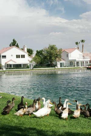Waterfront houses in an upscale neighborhood photo