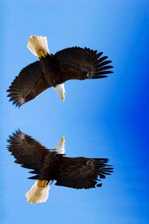 American eagle on blue sky photo