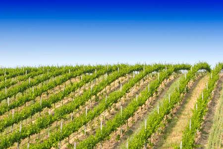 Beautiful California vineyard landscape