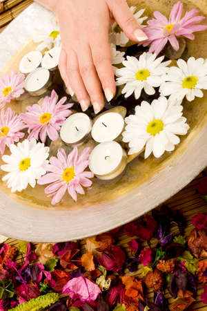Womans manicured hands with daisies photo
