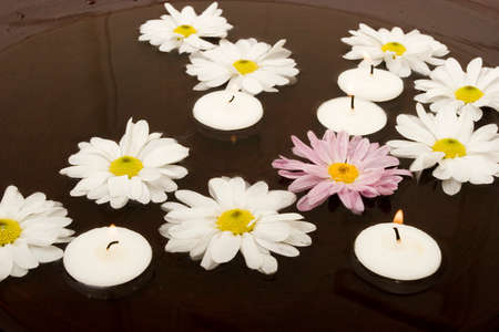 Daisies swimming in a bowl of water photo
