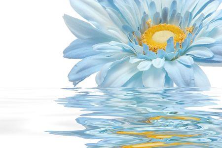 Beautiful gerbera daisy flower in water photo