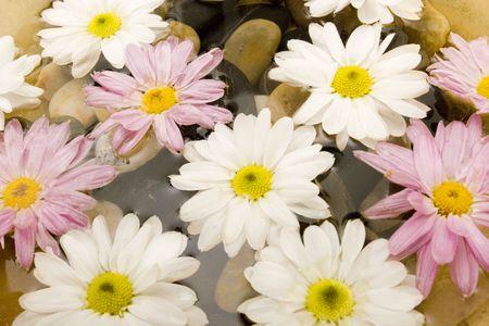 revitalize: Gerbera daisy flowers in water Stock Photo