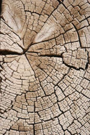 Close-up van de boom ringen Stockfoto