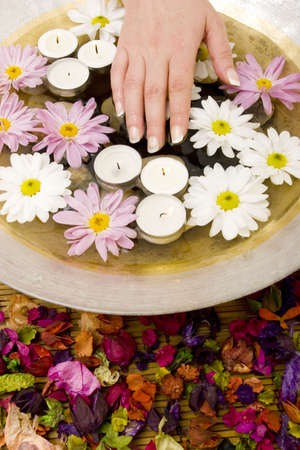 womans: Womans manicured hands with daisies