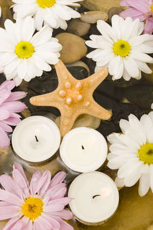 Starfish, daisies and candles in water