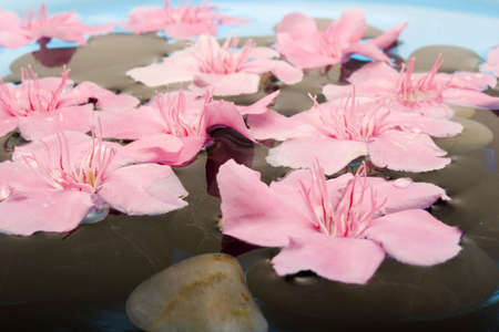 revitalize: Pink oleander flowers floating on water
