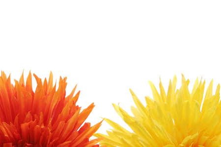 background: Beautiful yellow and orange daisy flowers on white background Stock Photo