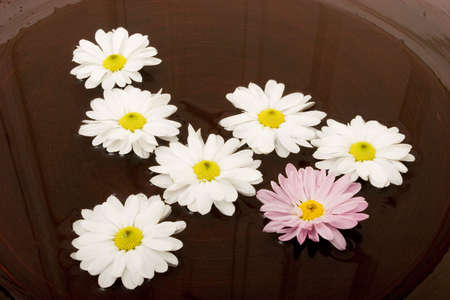 Daisies swimming in a bowl of water