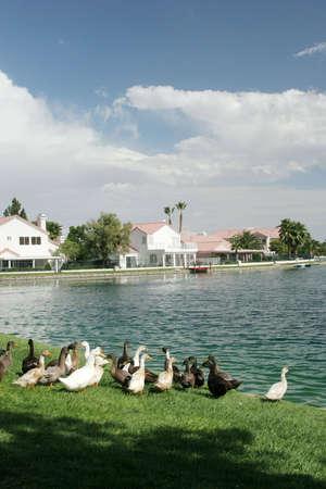 Beautiful upscale waterfront neighborhood photo