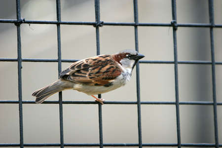 Bird standing on a cage
