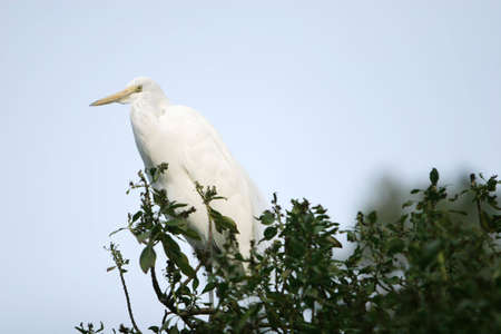 Bird standing on a tree branch
