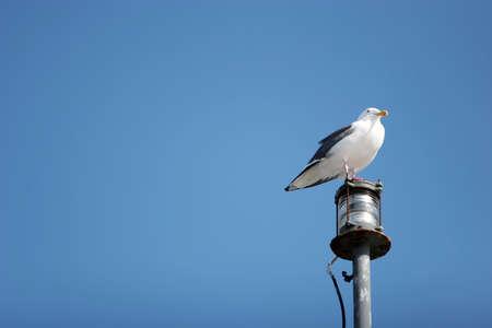 Vogel staande op een poll Stockfoto - 3030603