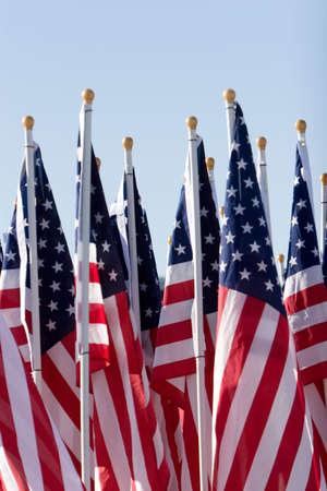 drapeaux am�ricain: Plusieurs drapeaux des Etats-Unis align�s  Banque d'images