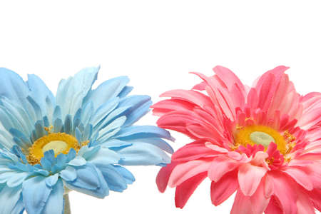 Beautiful pink and blue daisy flowers on white background photo