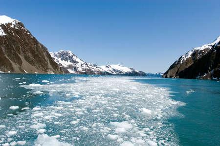 Glacier pieces swimming in the ocean in Alaska Kenai National Park photo