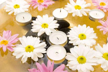 白いヒナギクおよび水スパ蝋燭