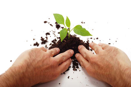 Planting fresh green to save environment Stock Photo - 3379017