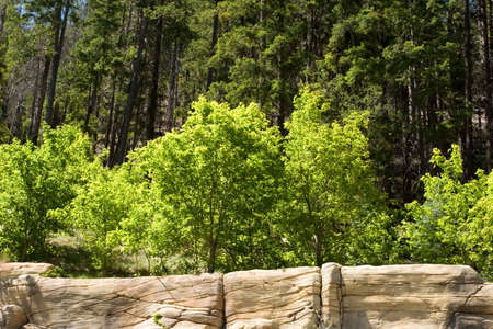 az: Scenic view of green trees on the rocks