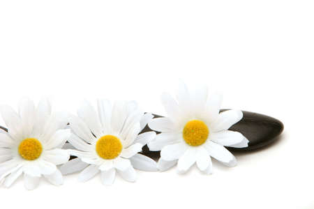 stones and daisies on white background Фото со стока