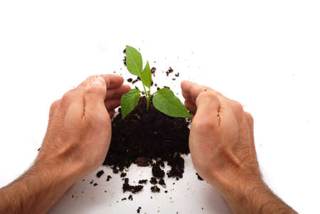 Planting fresh green to save environment Stock Photo - 3401323