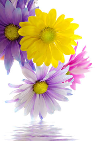 Colorful daisy arrangement in water photo