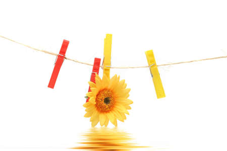 Yellow daisy hanging on rope by clothespin photo