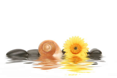 rejuvenating: Spa stones, seashell and yellow daisy on isolated white background Stock Photo