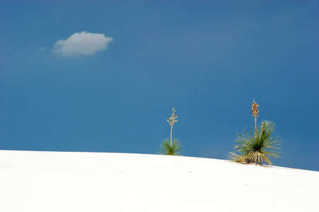 White sand dunes national park photo