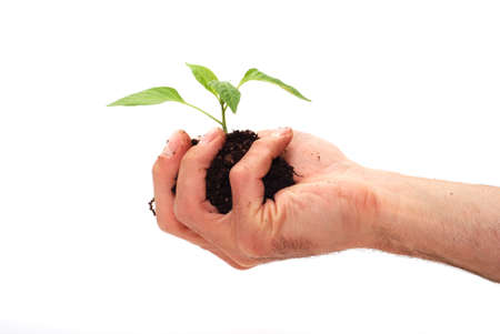 save the environment: Planting fresh green to save environment Stock Photo