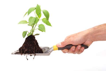 Planting fresh green to save environment photo
