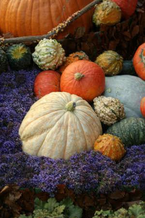 Thanksgiving decor photo