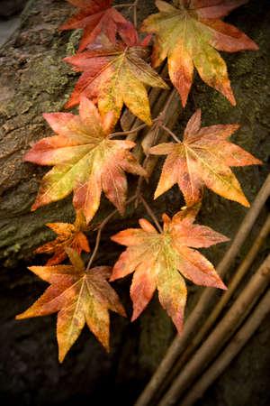 changing color: Las hojas cambiando de color durante el oto�o