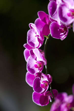 Colorful orchid flowers in the garden photo