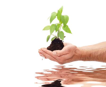 Planting fresh green to save environment Stock Photo - 4200373