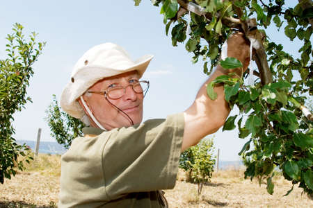 Farmer working in an orchard photo