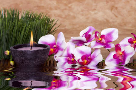 Spa candle, orchid flowers and green grass for alternative therapy Stock Photo - 4385274