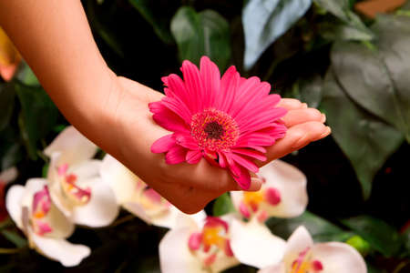 Womand manicured hands with flowers