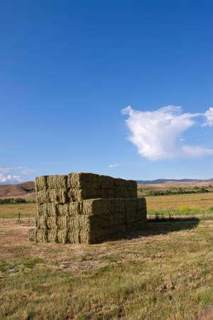 Pajares en campo abierto de granja  Foto de archivo - 6907498