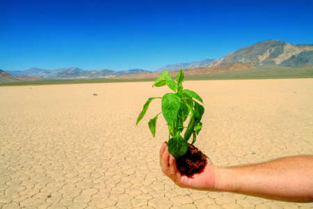 Man is holding green plant in droughted desert photo