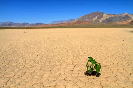 mapped: Green fresh vegetable planted on cracked desert ground Stock Photo