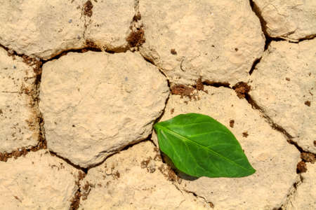 Fresh green leaf coming out from cracked ground photo