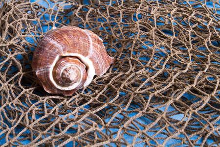 indoor shot: Concha sobre pesca tiro interior neto