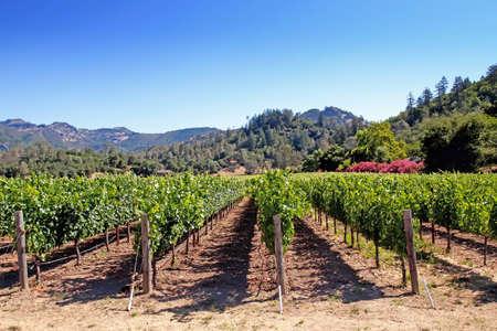 Scenic vineyard in Napa Valley California photo