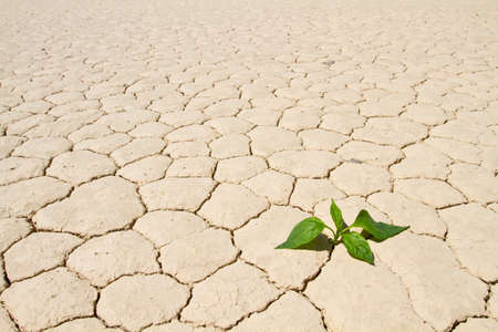 Fresh green vegetable coming to life on cracked desert ground photo