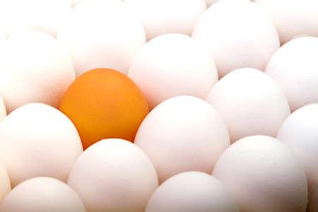Brown egg among white eggs Stock Photo - 7321481