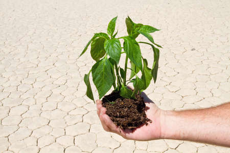 Man is holding green plant in drought desert photo