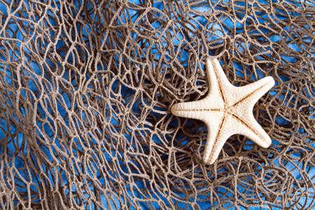 seastar: Sea Star on fishing net studio shot Stock Photo
