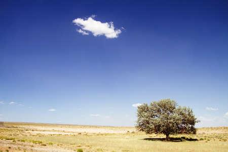 Einen einsamen Baum in der Wüste gegen blauen Himmel Standard-Bild - 9002879
