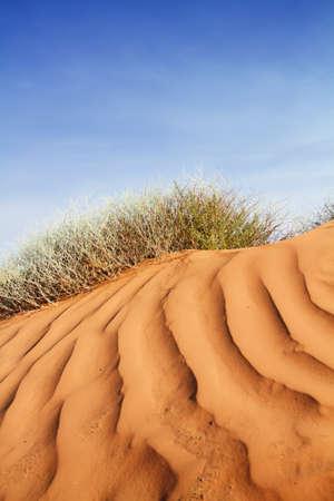 Rippled sand dunes in southwest usa Standard-Bild - 8996375